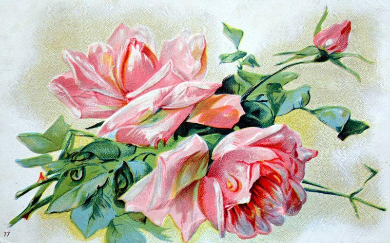 Mitzismiscellany_pink_rose_postcard