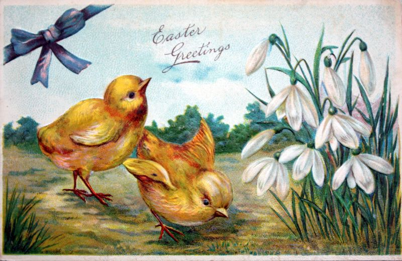 Mitzismiscellany_Easter_chicks_postcard